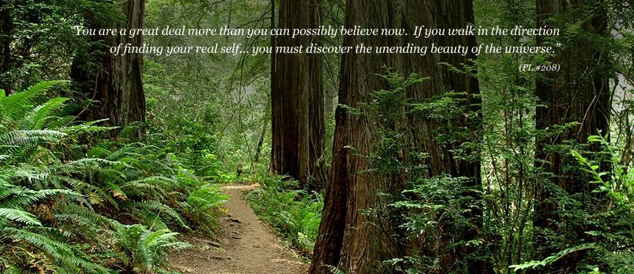 hero-redwoods